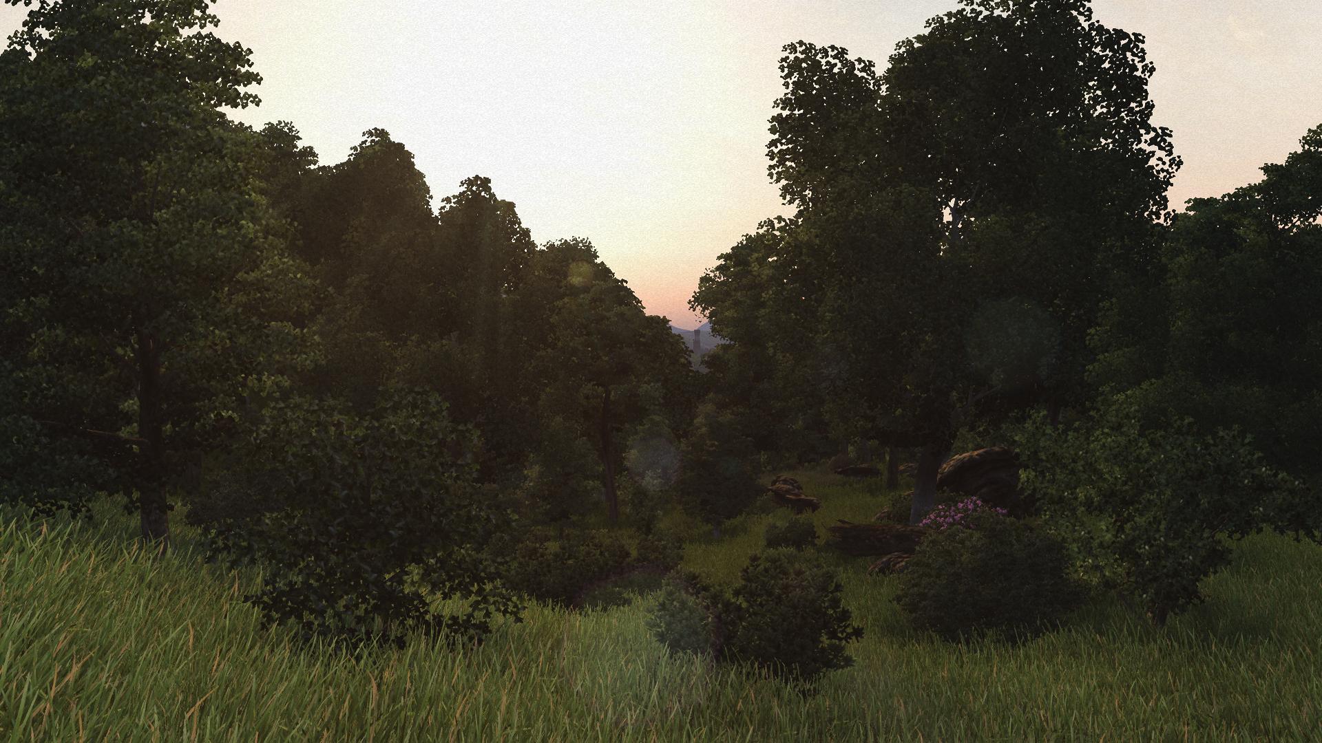 Lush Woodlands